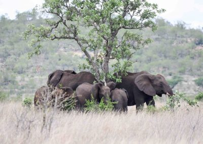Kruger National Park, three day safari in South Africa