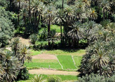 Green Morocco